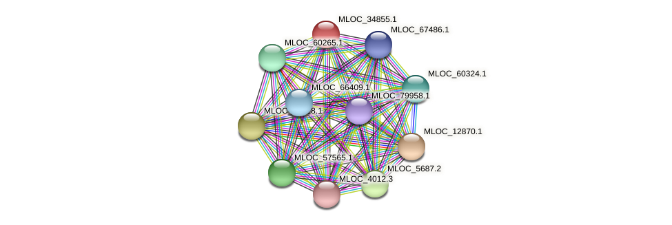 MLOC_34855.1 protein (Hordeum vulgare) - STRING interaction network