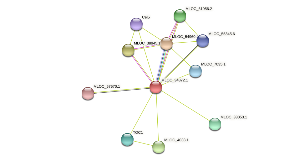 MLOC_34872.1 protein (Hordeum vulgare) - STRING interaction network
