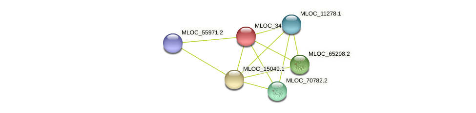MLOC_34880.1 protein (Hordeum vulgare) - STRING interaction network