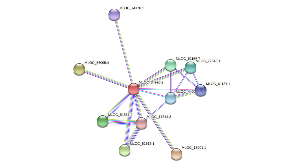 MLOC_34990.2 protein (Hordeum vulgare) - STRING interaction network