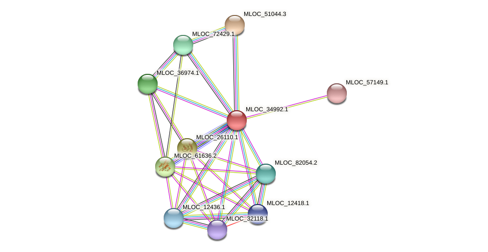 MLOC_34992.1 protein (Hordeum vulgare) - STRING interaction network