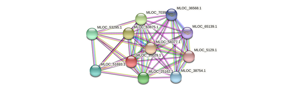 MLOC_35029.1 protein (Hordeum vulgare) - STRING interaction network