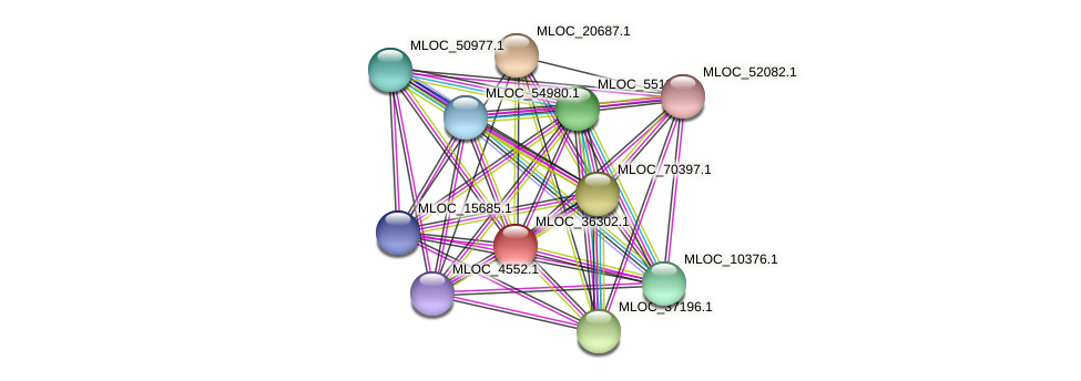 MLOC_36302.1 protein (Hordeum vulgare) - STRING interaction network