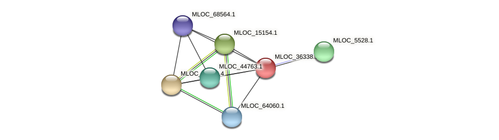 MLOC_36338.1 protein (Hordeum vulgare) - STRING interaction network