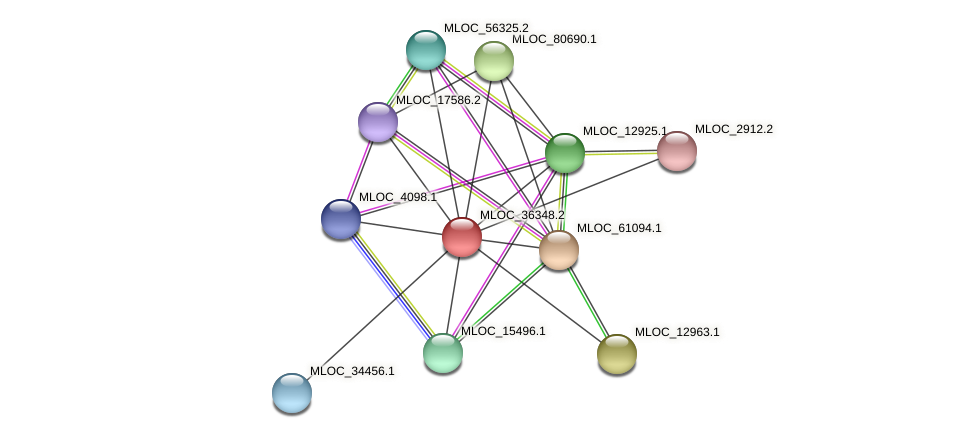 MLOC_36348.2 protein (Hordeum vulgare) - STRING interaction network