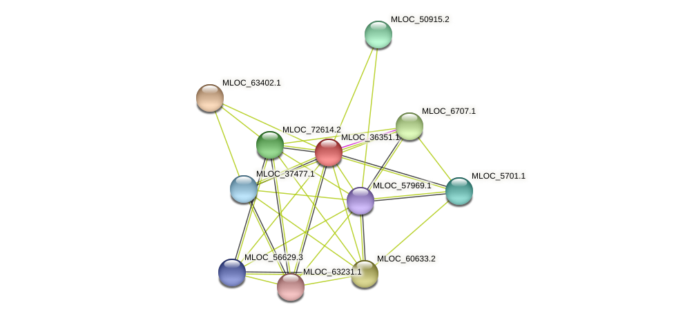 MLOC_36351.1 protein (Hordeum vulgare) - STRING interaction network