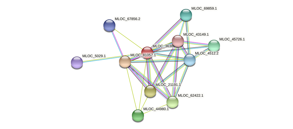 MLOC_36386.2 protein (Hordeum vulgare) - STRING interaction network