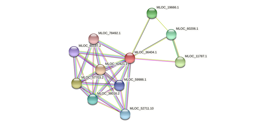 MLOC_36404.1 protein (Hordeum vulgare) - STRING interaction network