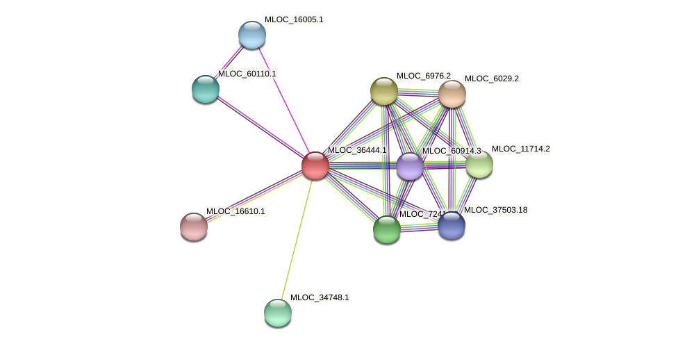 MLOC_36444.1 protein (Hordeum vulgare) - STRING interaction network