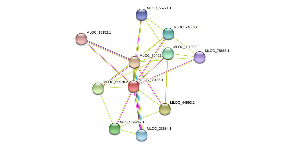 MLOC_36456.1 protein (Hordeum vulgare) - STRING interaction network