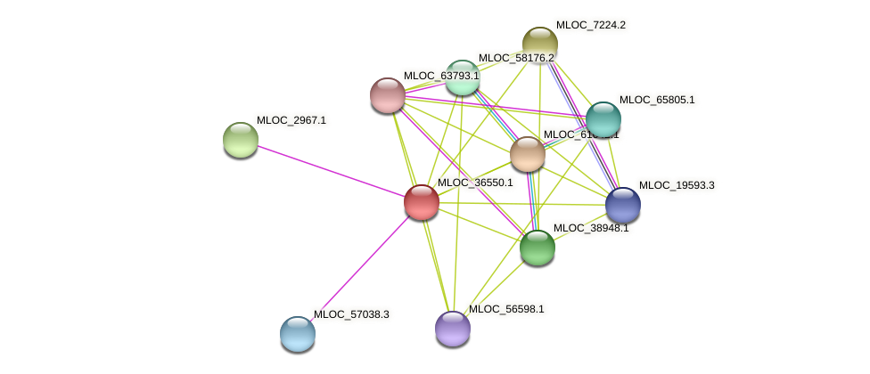 MLOC_36550.1 protein (Hordeum vulgare) - STRING interaction network