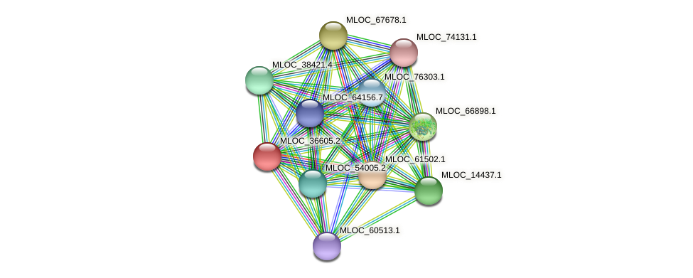 MLOC_36605.2 protein (Hordeum vulgare) - STRING interaction network