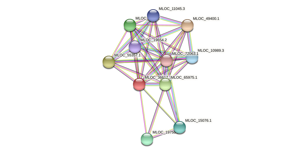 MLOC_36617.10 protein (Hordeum vulgare) - STRING interaction network