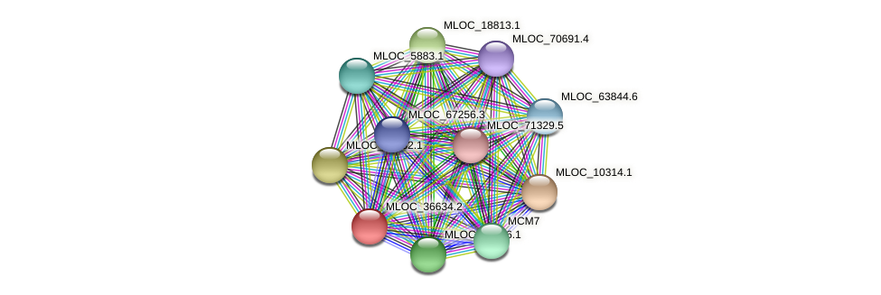 MLOC_36634.2 protein (Hordeum vulgare) - STRING interaction network