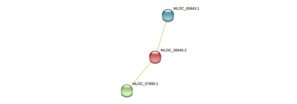 MLOC_36640.2 protein (Hordeum vulgare) - STRING interaction network