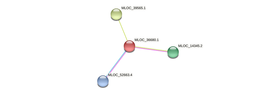 MLOC_36680.1 protein (Hordeum vulgare) - STRING interaction network