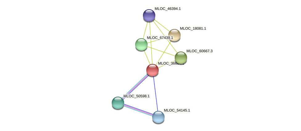 MLOC_36684.1 protein (Hordeum vulgare) - STRING interaction network