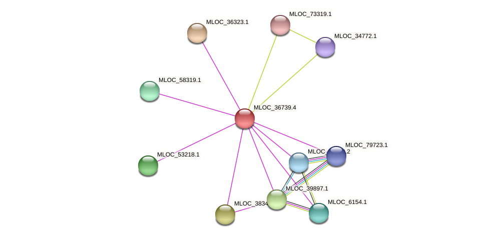 MLOC_36739.4 protein (Hordeum vulgare) - STRING interaction network