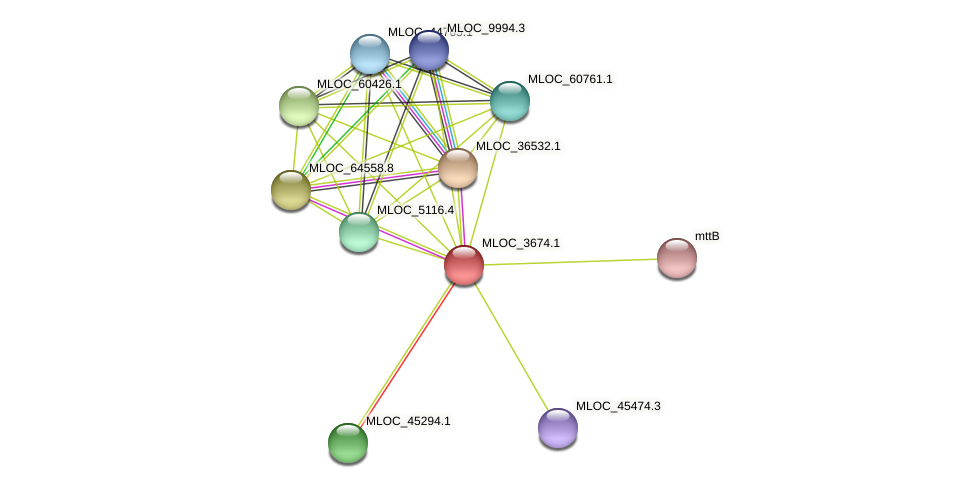 MLOC_3674.1 protein (Hordeum vulgare) - STRING interaction network