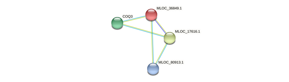 MLOC_36849.1 protein (Hordeum vulgare) - STRING interaction network