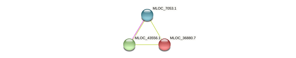 MLOC_36880.3 protein (Hordeum vulgare) - STRING interaction network