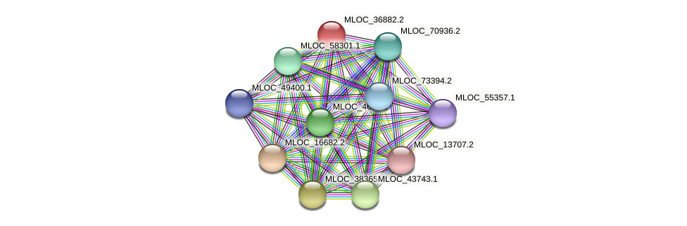 MLOC_36882.2 protein (Hordeum vulgare) - STRING interaction network