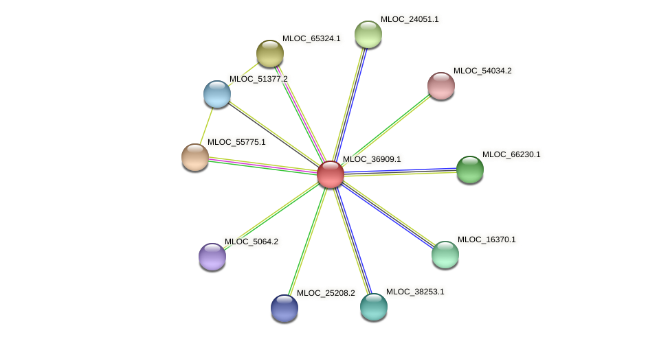 MLOC_36909.1 protein (Hordeum vulgare) - STRING interaction network