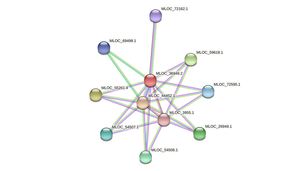 MLOC_36949.2 protein (Hordeum vulgare) - STRING interaction network