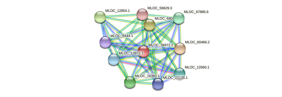 MLOC_36972.2 protein (Hordeum vulgare) - STRING interaction network