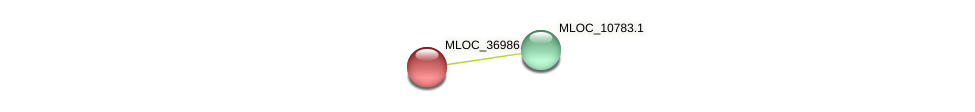 MLOC_36986.1 protein (Hordeum vulgare) - STRING interaction network