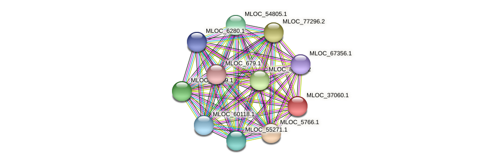 MLOC_37060.1 protein (Hordeum vulgare) - STRING interaction network