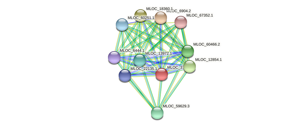 MLOC_37134.2 protein (Hordeum vulgare) - STRING interaction network