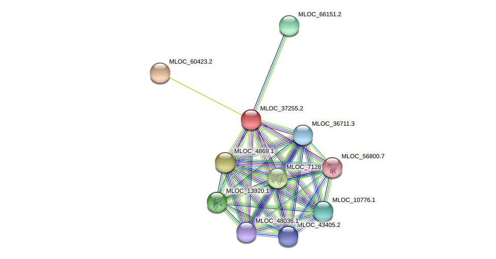 MLOC_37255.2 protein (Hordeum vulgare) - STRING interaction network