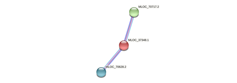MLOC_37348.1 protein (Hordeum vulgare) - STRING interaction network