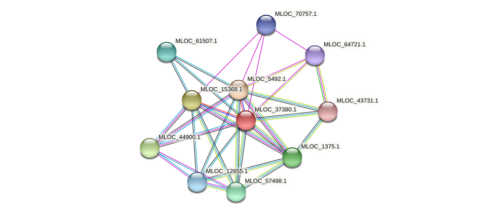 MLOC_37380.1 protein (Hordeum vulgare) - STRING interaction network