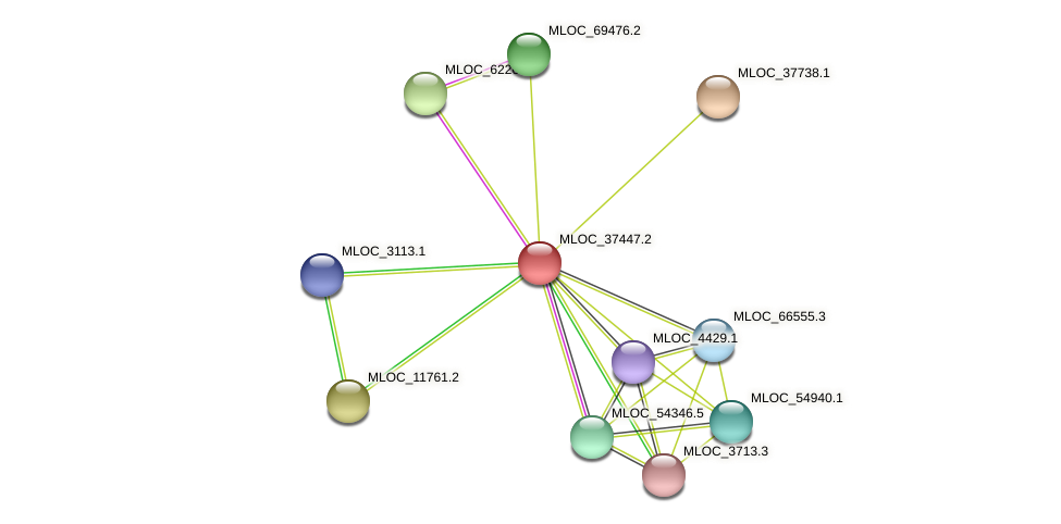 MLOC_37447.2 protein (Hordeum vulgare) - STRING interaction network
