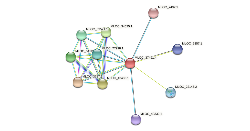 MLOC_37491.4 protein (Hordeum vulgare) - STRING interaction network