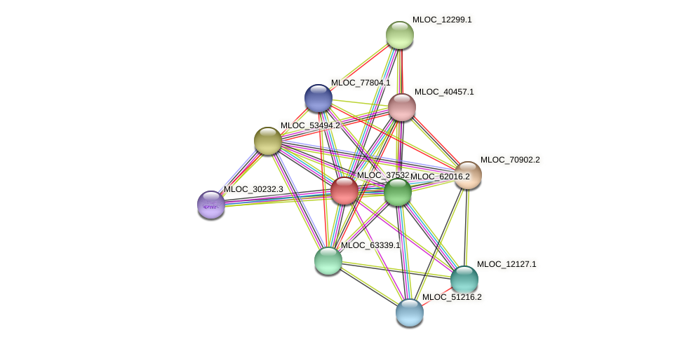 MLOC_37532.2 protein (Hordeum vulgare) - STRING interaction network