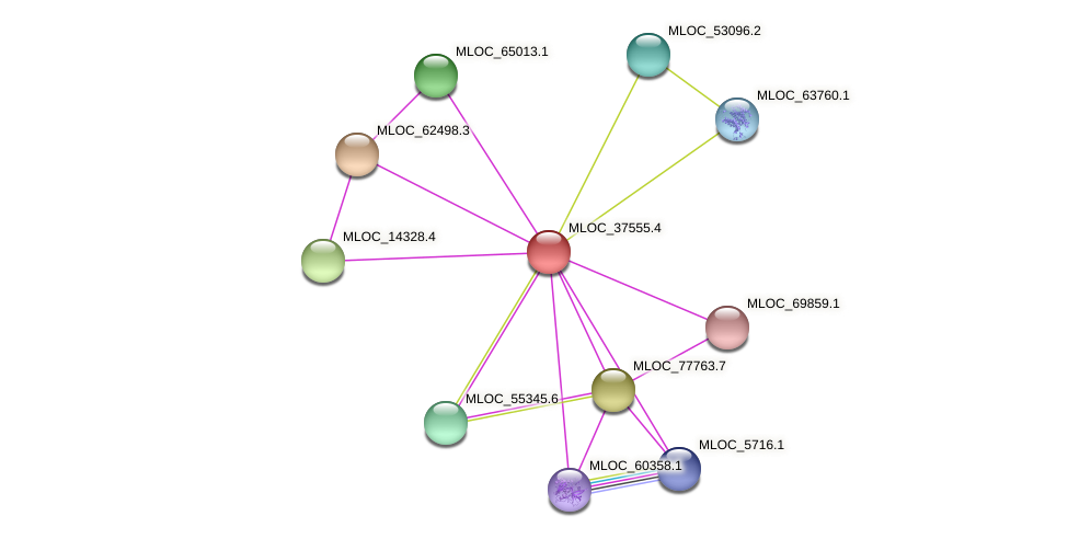 MLOC_37555.4 protein (Hordeum vulgare) - STRING interaction network