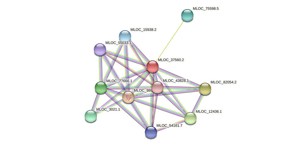 MLOC_37560.2 protein (Hordeum vulgare) - STRING interaction network