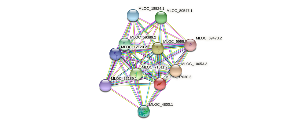 MLOC_37630.3 protein (Hordeum vulgare) - STRING interaction network