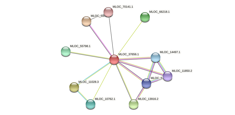 MLOC_37656.1 protein (Hordeum vulgare) - STRING interaction network