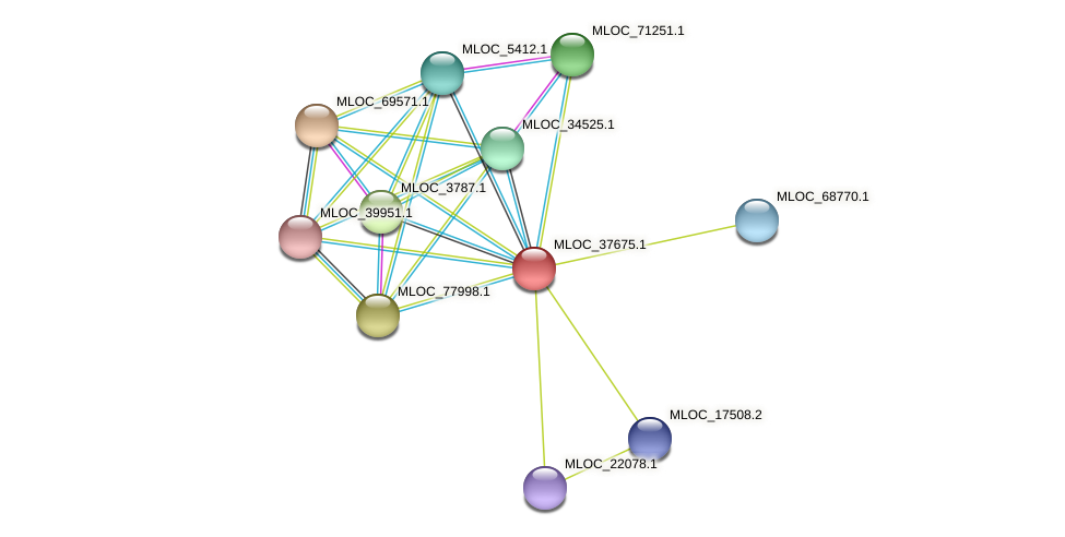 MLOC_37675.1 protein (Hordeum vulgare) - STRING interaction network