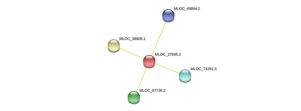 MLOC_37695.2 protein (Hordeum vulgare) - STRING interaction network