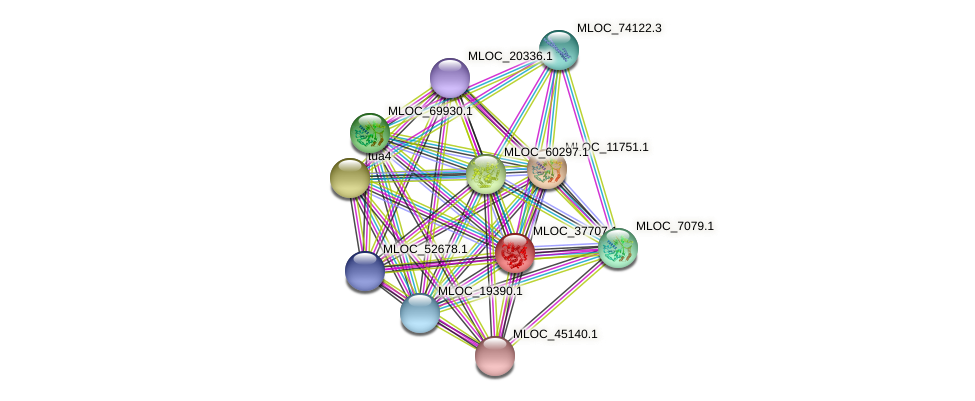 MLOC_37707.1 protein (Hordeum vulgare) - STRING interaction network
