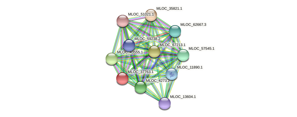 MLOC_37763.1 protein (Hordeum vulgare) - STRING interaction network