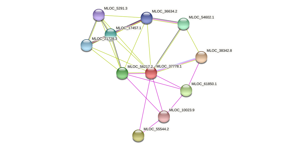 MLOC_37778.1 protein (Hordeum vulgare) - STRING interaction network