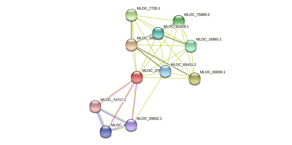 MLOC_37800.1 protein (Hordeum vulgare) - STRING interaction network