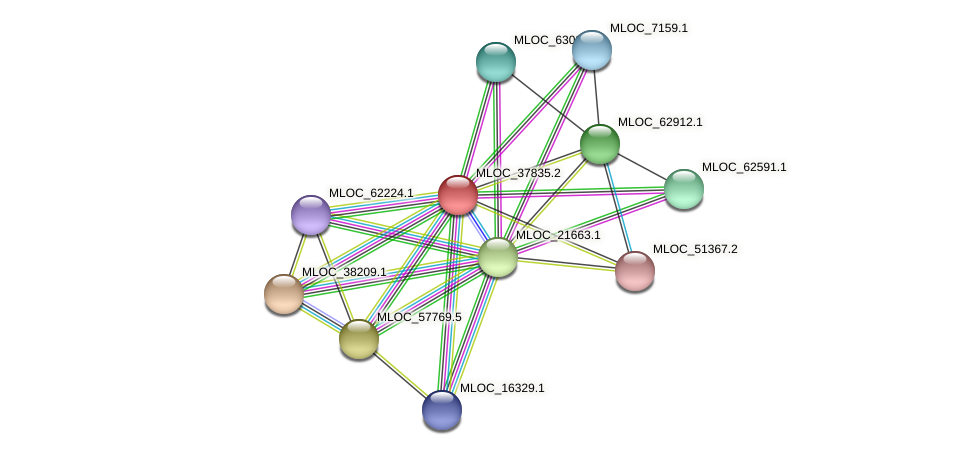 MLOC_37835.2 protein (Hordeum vulgare) - STRING interaction network