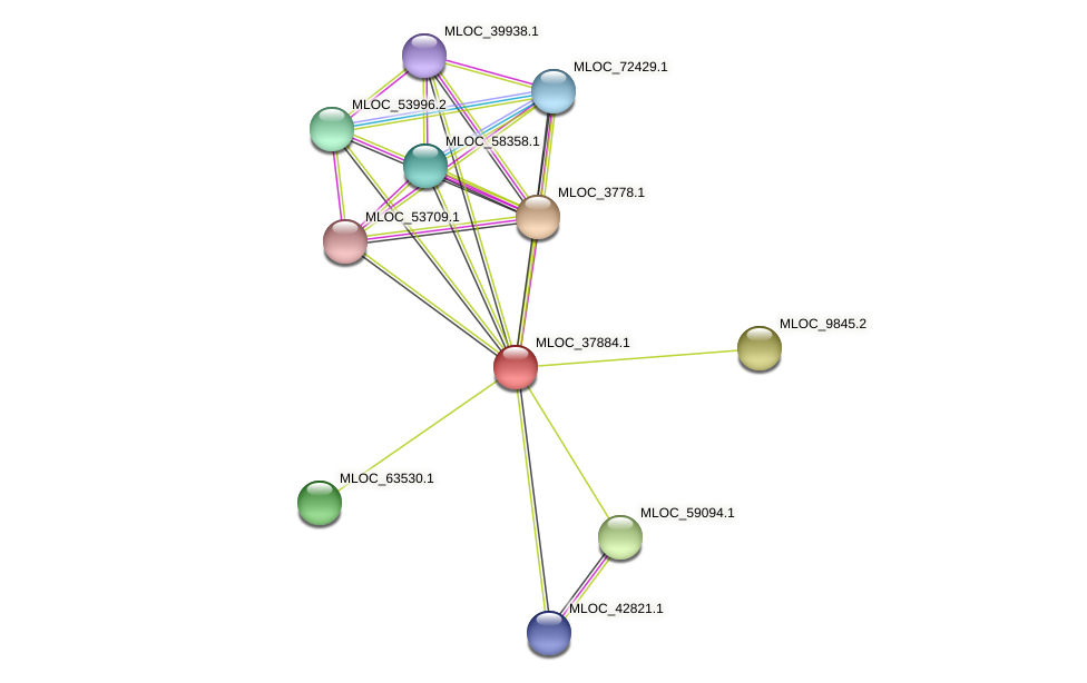 MLOC_37884.1 protein (Hordeum vulgare) - STRING interaction network
